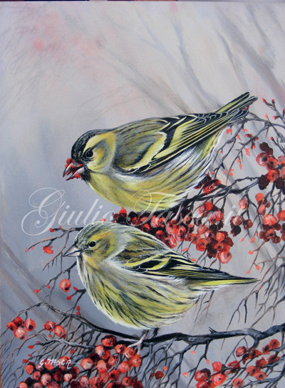 Lucherino (carduelis spinus) - Year 2011 - Private collection