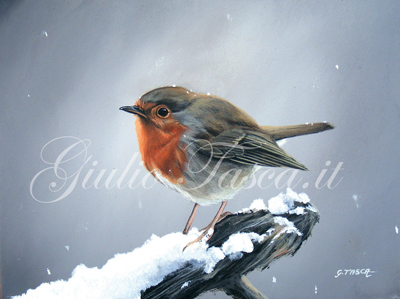 Pettirosso (erithacula rubecula rubecula) - Year 2011 - Private collection