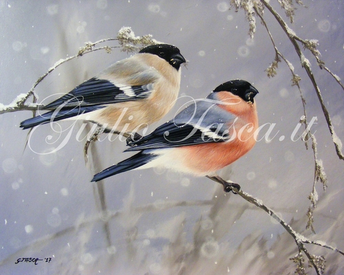 Nevicata tra i colori 30X24 - Jahr 2017 - Private collection